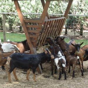 Geitenboerderij Apeldoorn Amersfoort faciliteiten faciliteit